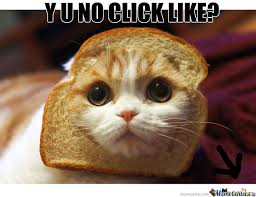 Cat In Bread Meme - cat bread by thatguyxlr meme center