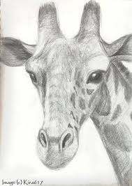 drawing giraffes realistic sketch of a giraffe drawn a couple