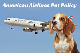 traveling with pets images Flying with your pet american airlines pet policy certapet jpg