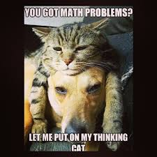 Dog Cat Meme - mathjoke haha humor joke math mathmeme meme problems cat thinking