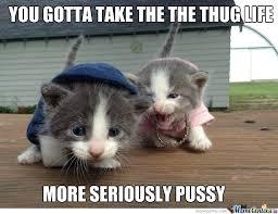 Cats Memes - top 26 thug life cat memes thug life meme