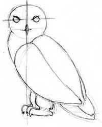 how to draw hedwig harry potter u0027s snowy owl u2013 draw fluffy