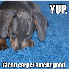 Carpet Cleaning Meme - 68 best carpet humor images on pinterest carpet rugs and rug