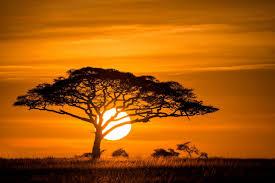 chambre style africain achetez en gros savane africaine en ligne à des grossistes savane