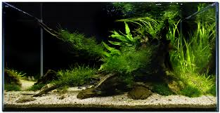 Aquascape Moss Sweet Aquascape Aquarium With Lilaeopsis Brasiliensis Plant Feat