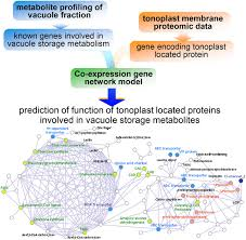 integrative approaches to enhance understanding of plant metabolic