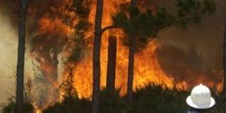 Wild Fires Near Merritt by Brush Fire Burns Near Canaveral Groves