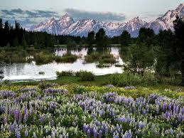 Wyoming where to travel in july images Grand teton national park grand teton national park wyoming and jpg