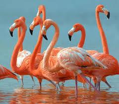 gafunkyfarmhouse this n that thursdays animal themed gafunkyfarmhouse this n that thursdays flamingo fever