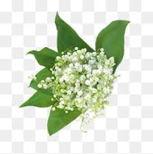 baby s breath flowers baby s breath flowers png images vectors and psd files free