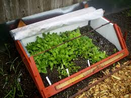 collection diy cold frame greenhouse photos best image libraries