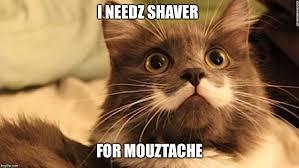Hipster Cat Meme - mustache cat meme 28 images mustache cat by spectre5095 meme