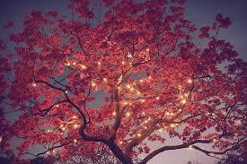 tree and lights tres lights fairies