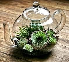 succulent terrarium you can look fish bowl terrarium you can look