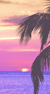 Palm Tree Wallpaper 3233 Best Images Images On Pinterest Wallpaper Backgrounds