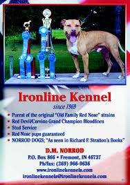 american pitbull terrier a legacy in gameness recent posts
