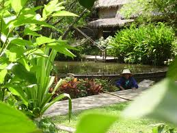 free images lawn flower jungle backyard botany rainforest