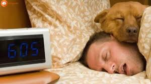 Man Sleeping In Bed Why Sleeping With Your Dog Is Actually Good For You Sirpuppy