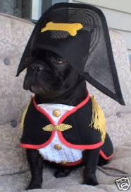 Frenchie Halloween Costume Fbrnetwork Napoleon