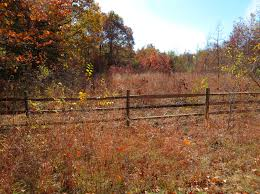 free thanksgiving background images free images tree nature forest grass trail farm meadow