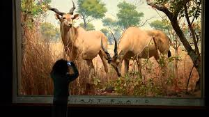 treasures of new york american museum of natural history youtube