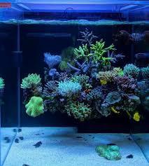 Nano Aquascaping Check Out This Aquascape Aquascaping Forum Nano Reef Com