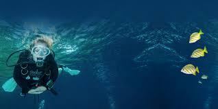 Dive Flag Australia Perth Scuba Padi Diving Courses And Dive Equipment Western Australia
