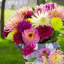 longfield gardens flower bulbs garden plants u0026 flowers the