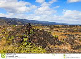 Hawaii vegetaion images Hawaii photos images pictures dreamstime id 19381 jpg