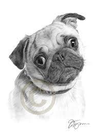 pencil drawing of a pug by artist gary tymon