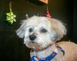bow wow billies dog grooming service