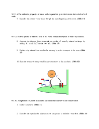 9 1 transport in the xylem of plants worksheet