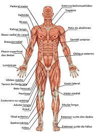 25 melhores ideias de anatomia no pinterest anatomia do corpo