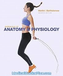 Hole Anatomy And Physiology 13th Edition Download Ebook Essentials Of Human Anatomy U0026 Physiology Pdf Free