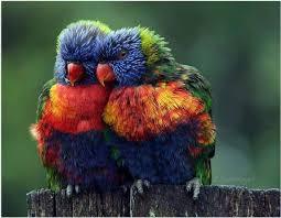 imágenes asombrosas naturaleza 50 imágenes de naturaleza asombrosa imágenes taringa