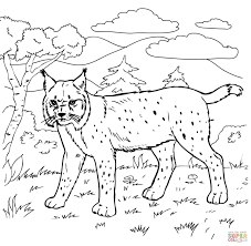 bobcat coloring pages getcoloringpages com