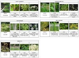 native plants in massachusetts nyis