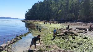 Garden Rock Wall by Clam Hunger Encyclopedia Of Puget Sound