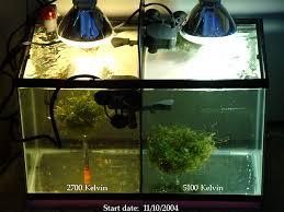 best led refugium light an inexpensive refugium bulb melev s reef