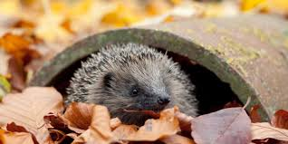 bbc earth how to help hedgehogs and other garden wildlife