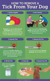 best 25 tick removal dog ideas on pinterest tick repellent for