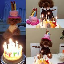dog birthday cake bro dog birthday hat with cake candles design