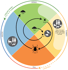 chapter 5 vector borne diseases climate and health assessment