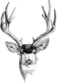 mule deer head drawings sketch coloring page