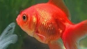 pesci alimentazione pesci alimentazione mangimi