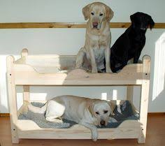 DIY Dog Bunk Beds Crates Diy Dog And Storage - Large bunk beds
