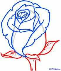 drawn rose simple pencil and in color drawn rose simple