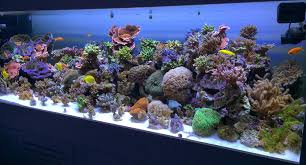 led aquarium lights for reef tanks pur pas par in aquarium reef planted lighting led wavelengths