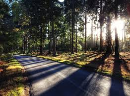 an open letter to the department for transport cycle new forest