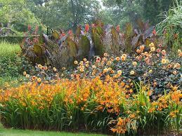 Canna Lilies A Brilliant Summer Border Idea With Crocosmia Dahlia And Canna Lilies
